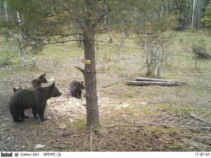 В Свердловской области начался сезон охоты на медведя, кабана и птицу