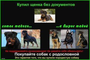 О собаках без документов