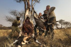Трудная охота  в Африке