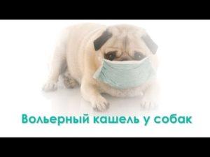 Вольерный кашель