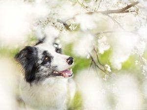 Весенний щенок